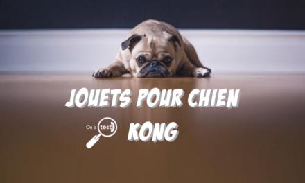 Test et avis 4 meilleurs jouets KONG pour chien