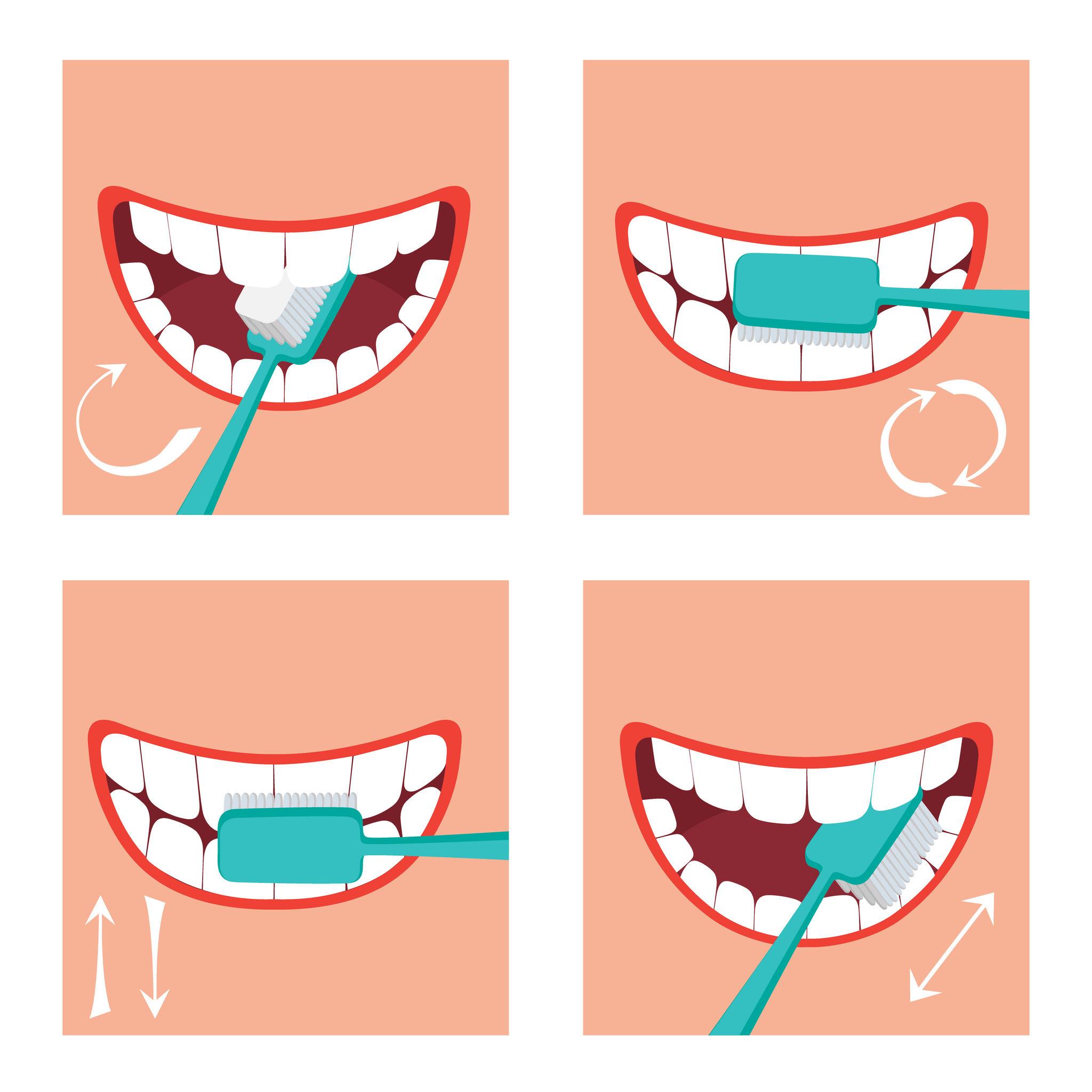 Comment se brosser les dents ?