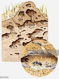photo d'une fourmilière pour le jeux Pocket ants