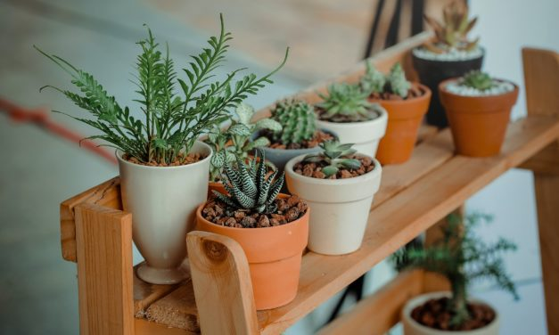 Le top 5 des plantes à avoir chez-soi